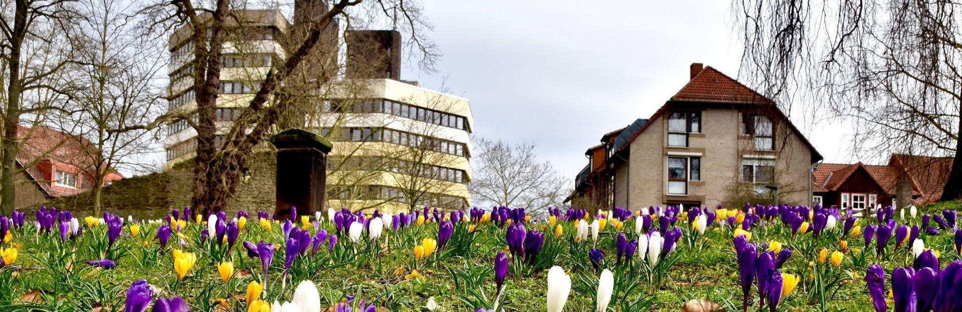 Kreishaus im Frühling